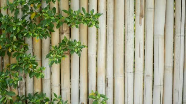 Bambuszaun umgeben von üppiger Vegetation. Langlebige Bambuszäune und leuchtend grüne Sträucher in Thailand. Natürlicher Hintergrund. saftige exotische tropische Blätter Textur Hintergrund mit Copyspace.