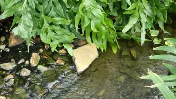 Různé zelené tropické rostliny rostoucí v blízkosti malého potoka se sladkou vodou za slunečného dne v úžasné zahradě. Jasné šťavnaté exotické tropické džungle listy textury pozadí, copyspace. Bledé listí.