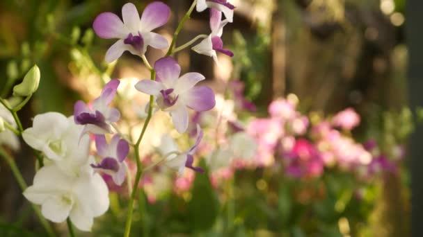 Krásné fialové fialové a fialové orchideje rostoucí na rozmazaném pozadí zeleného parku. Uzavřít makrotropické okvětní lístky v jarní zahradě mezi slunečnými paprsky. Exotické jemné květinové květy s kopírovacím prostorem