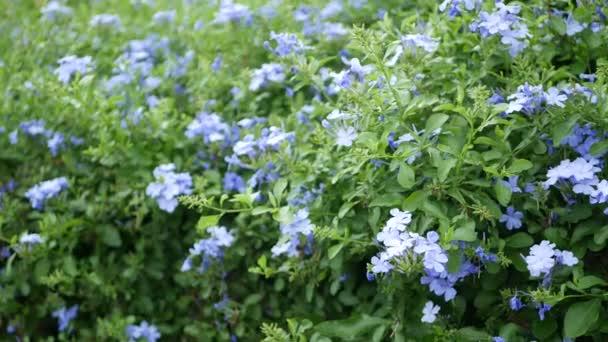 Homályos közeli makró színes trópusi virág tavaszi kertben gyengéd szirmok között napfényes buja lombozat. Absztrakt természetes egzotikus háttér másolási hellyel. Virágok és levelek mintázata.