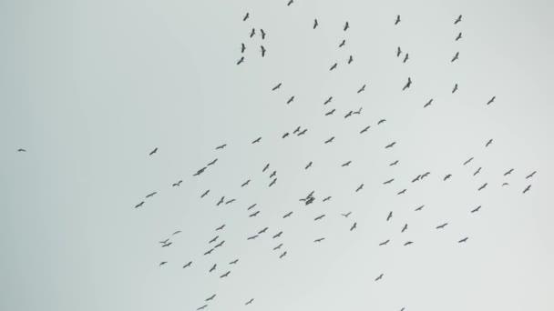 Alatta gólyacsorda repül szürke felhős ég. A szárnyaló madarak sziluettjei, mint a szabadság és a természet szimbóluma. A környezet és a veszélyeztetett állatfajok megőrzésének koncepciója