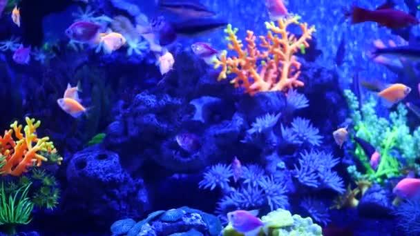 Colorful vivid fishes glow, violet aquarium under ultraviolet uv light. Purple fluorescent tropical aquatic paradise exotic background, luminous shiny ecosystem, vibrant fantasy decorative neon tank