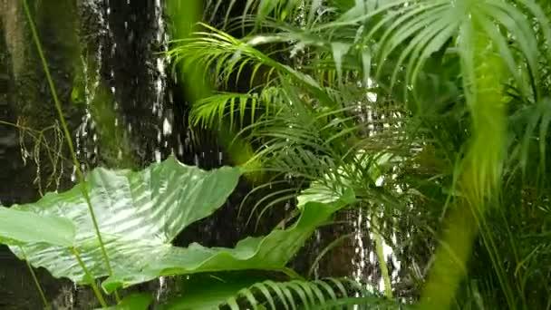 Cákající voda v deštném pralese. Džungle tropické exotické pozadí s potokem a divoké šťavnaté zelené listy v lese. Deštný prales nebo zahradní zeleň. Čerstvé zářivé rajské rostliny listoví s bokeh