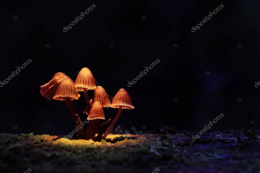 small poisonous mushrooms