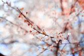 krásné jarní květiny