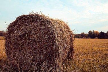 landscape of haystacks in a field