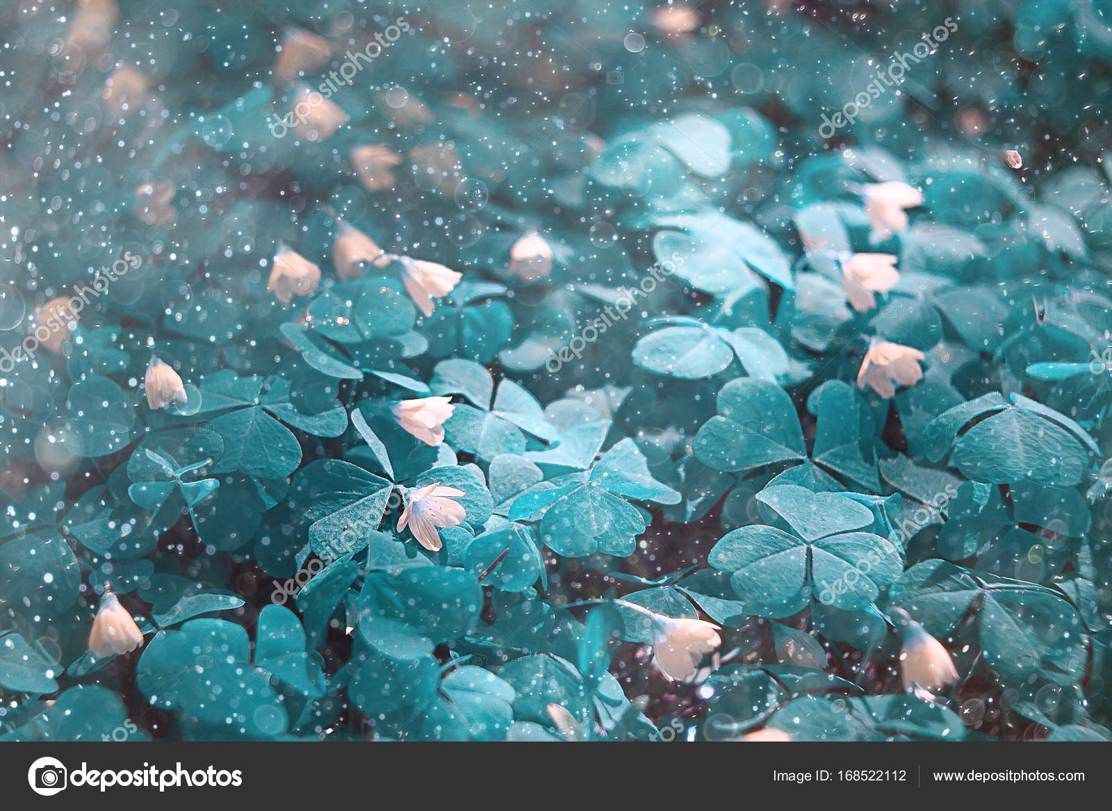 Many Growing Clover Leaves Toned Teal Blue Color Amazing Nature