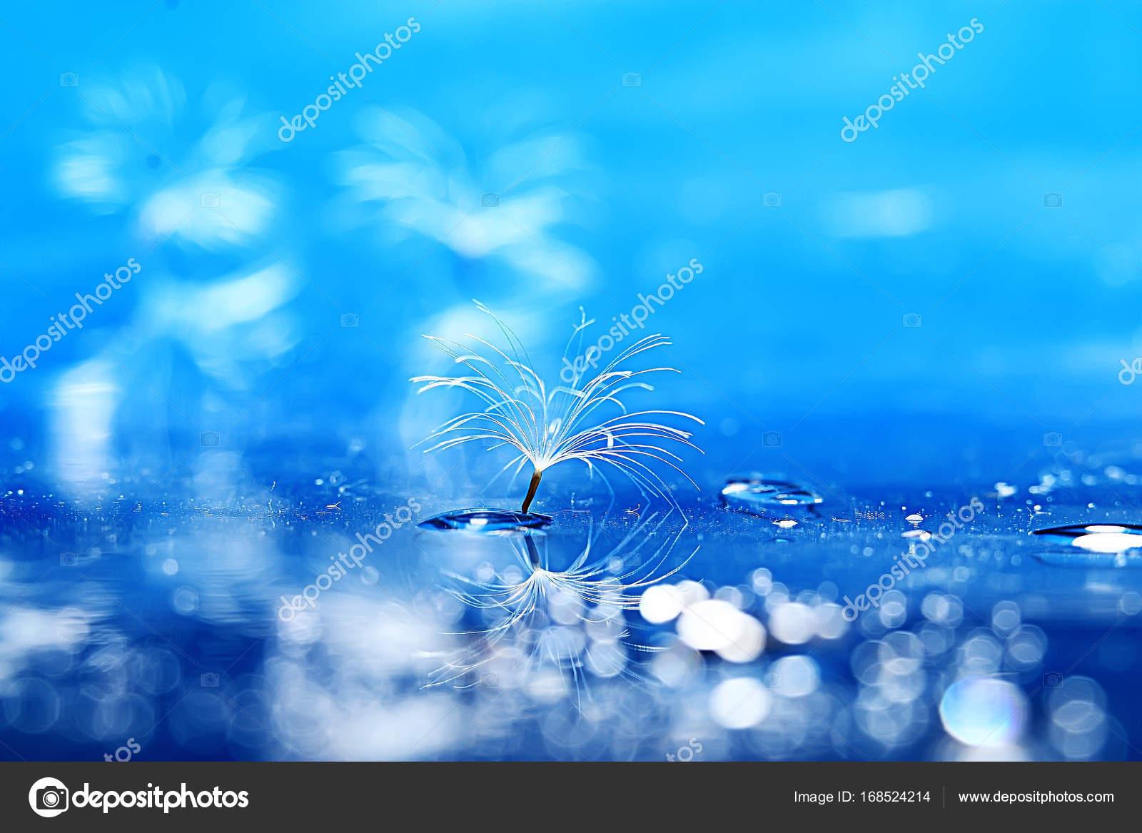 Dry Dandelion Parachute Seed Light Blue Background Summer Nature