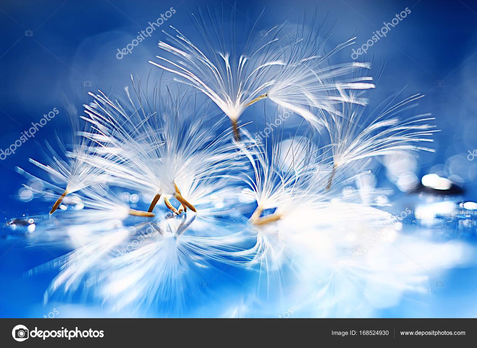Dry Dandelion Parachute Seeds Light Blue Background Summer Nature