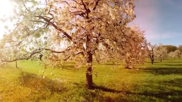 Letecký pohled na jarní stromy na pozadí jarní slunce odlesku světla příroda rostliny