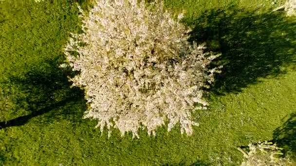 létání nad jarní stromy jarní rostliny přírodní pozadí summertim