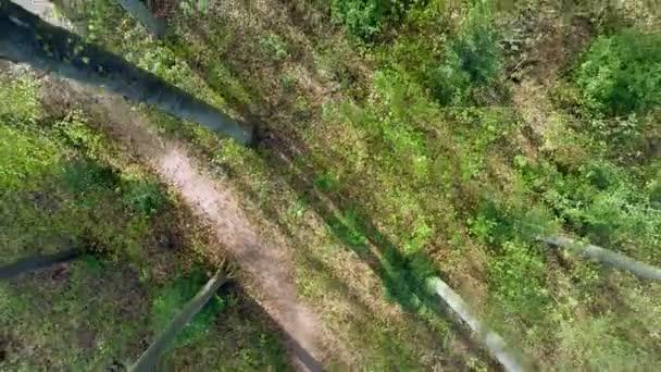 Letecký pohled na stromy lesní silueta jarní slunce odlesku světla příroda rostliny