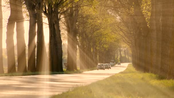 nap sugarai sunbeam fák sziluettje háttér sugárzó fény természet fantasy