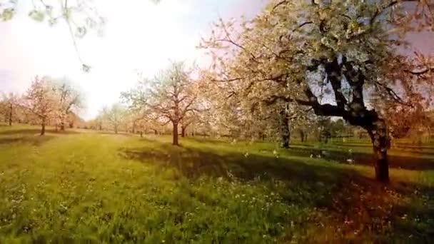 stromy v jarní květiny rostliny přírodní pozadí letní letecký pohled