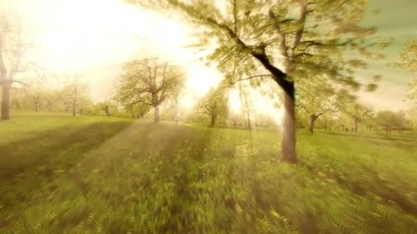 sun rays sunbeam trees silhouette background beaming light nature fantasy