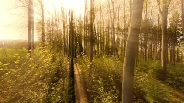 sun rays sunbeam trees silhouette background beaming light nature fantasy