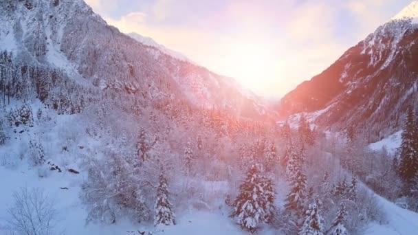 sníh zimní krajina červánky soumraku Les lesů, stromů