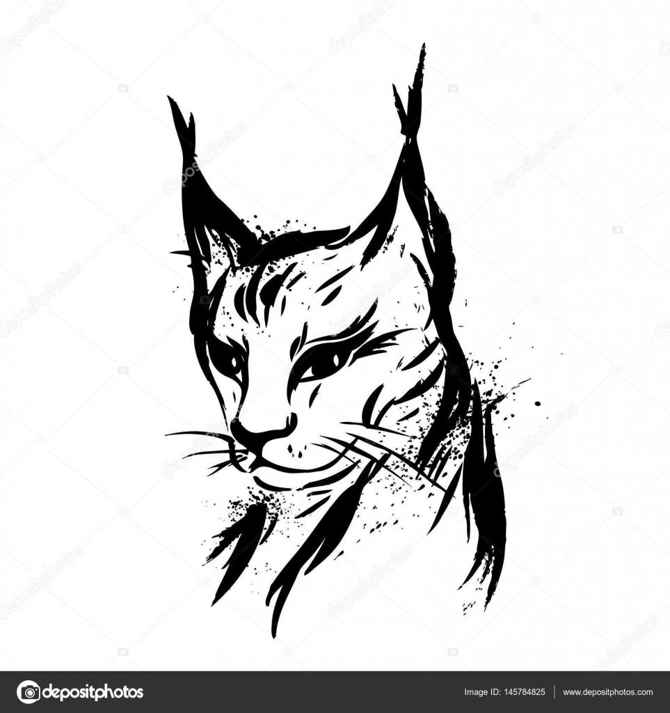 Luchs Wilde Katze Raubtier Hand Gezeichnet Schwarz Weiß