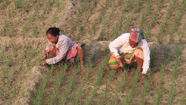 Peasants on a field in Kantanagar near Dinajpur, Bangladesh