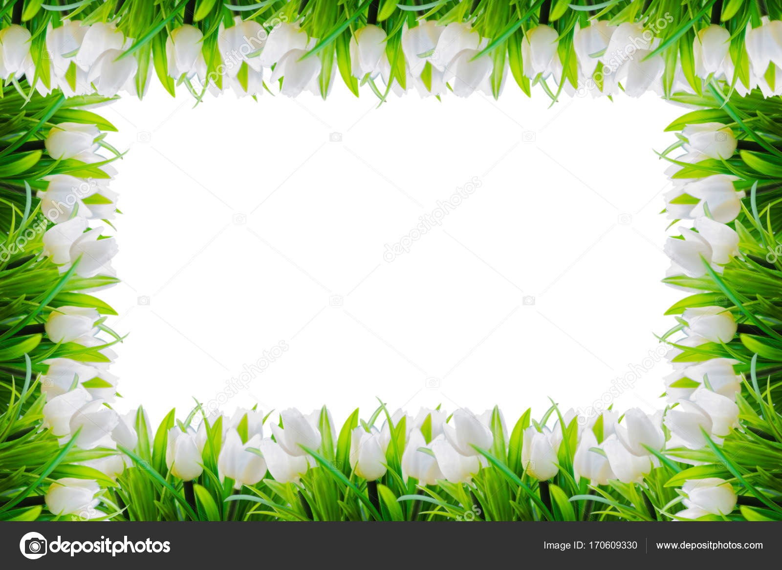 White tulips flower border frame for background with space ...