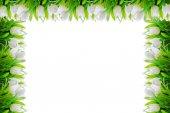 Bílé tulipány květina scénu a hraniční rám pro pozadí s prostorem pro váš návrh obrázek nebo text