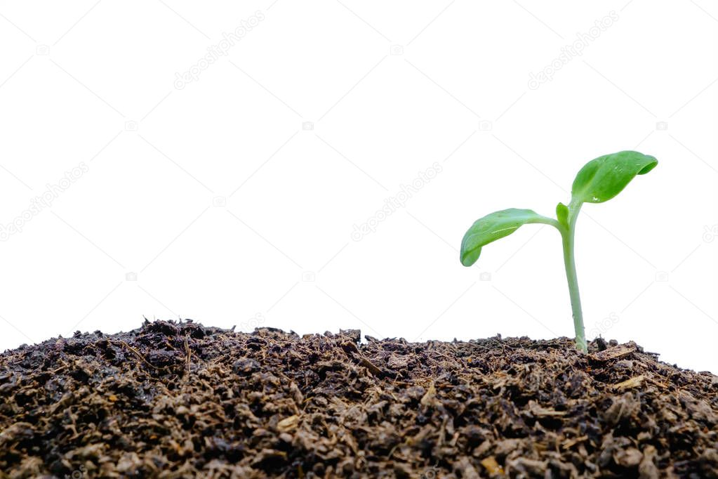Sprout growing from soil on white background for green environment concept
