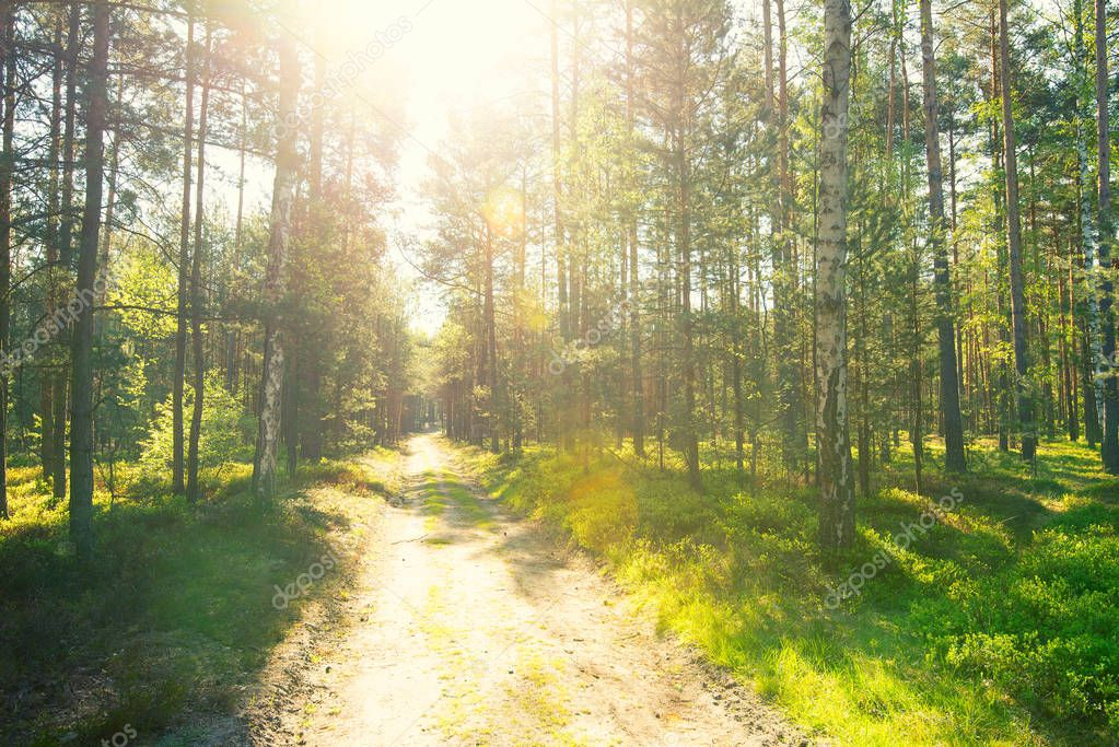 Фотообои Four season in forest