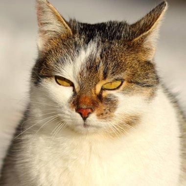 portrait of cute domestic cat