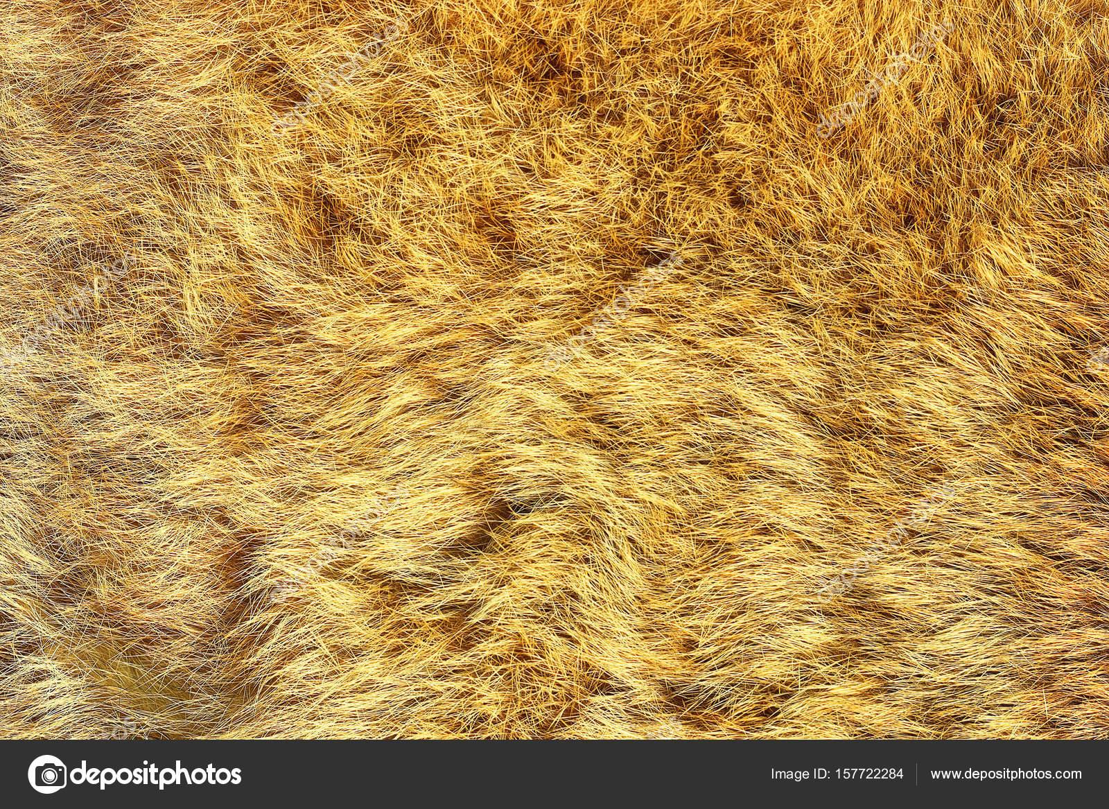 european lynx real pelt — Stock Photo © taviphoto #157722284 for Lynx Pelt  287fsj