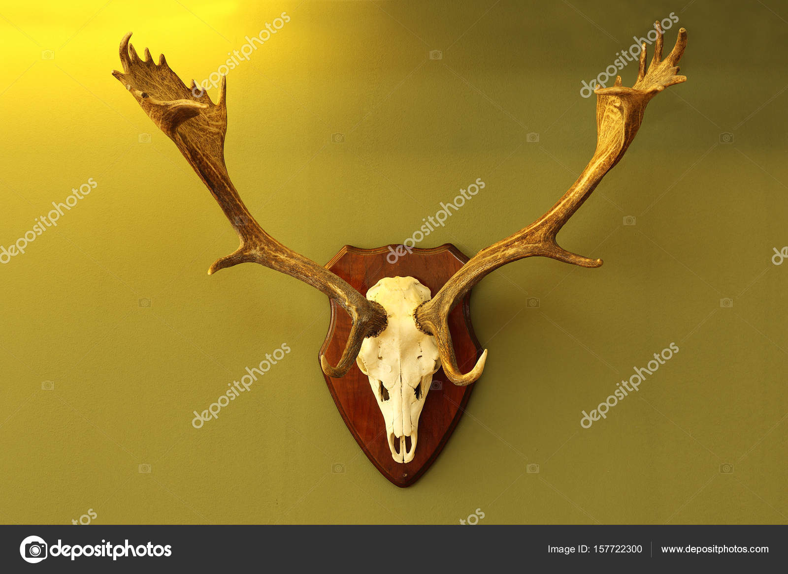 fallow deer trophy mounted on wall — Stock Photo © taviphoto #157722300