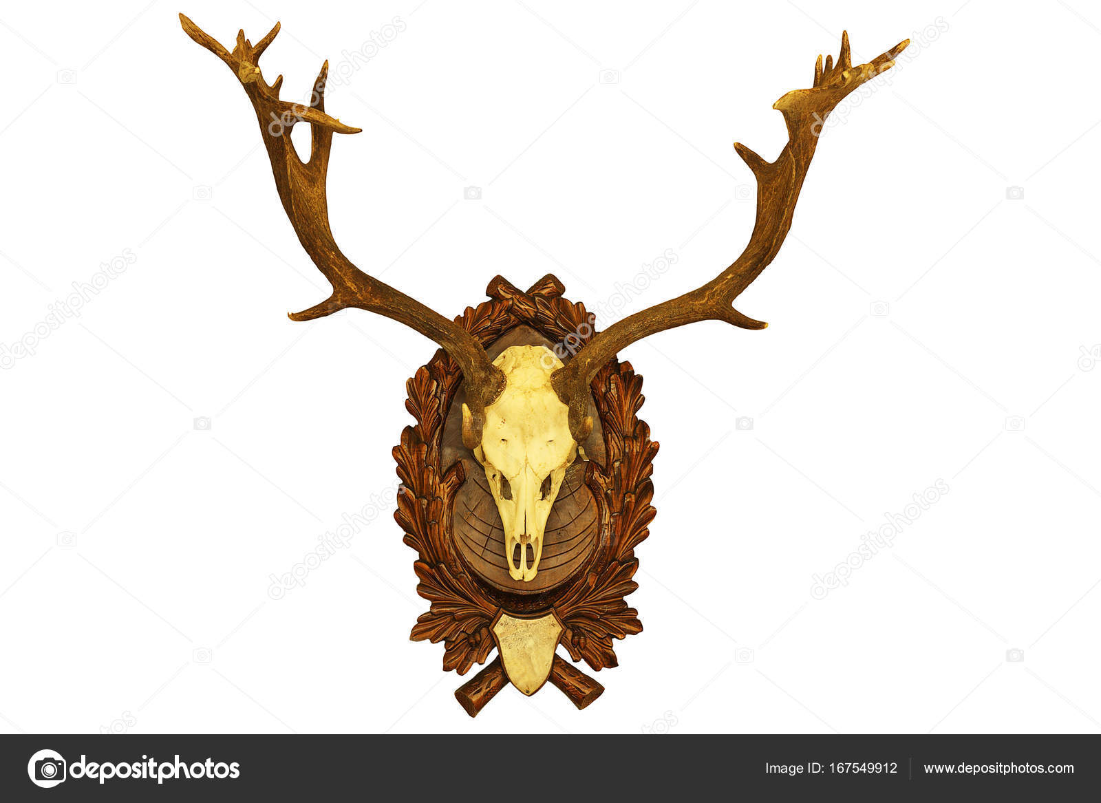 beautiful fallow deer stag hunting trophy — Stock Photo © taviphoto ...