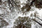 vista astratta della copertura forestale in mattina nebbiosa