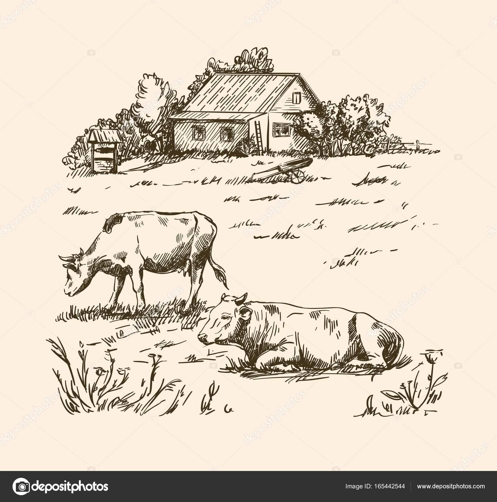 village houses and farmland — Stock Vector © lapuma #165442544 for Farmland Sketch  111ane