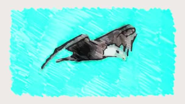 značky nakreslené orel bělohlavý sky fly stop pohybu kreslené animace bezešvé smyčka - nové kvality Příroda zvířata ručně retro vintage barevný videozáznam