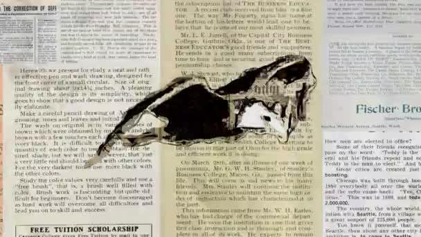 novinový papír grunge bald eagle fly stop-motion kreslené animace bezešvé smyčka - nové kvality Příroda zvířata ručně retro vintage barevný videozáznam