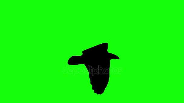 Flying bird silhouette seamless loop animation on chroma key green screen - new quality nature animals video footage