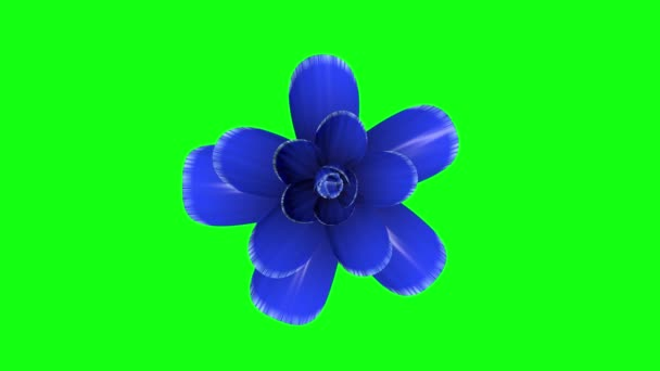 opening long blooming blue flower time-lapse 3d animation isolated on chroma key green screen background new quality beautiful holiday natural floral cool nice 4k video footage