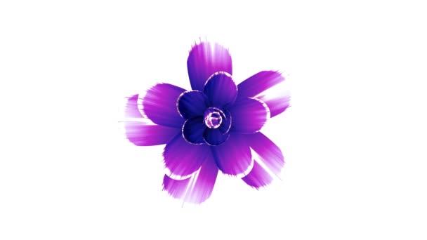 Öffnung lange blühende lila Blume Zeitraffer 3d-Animation isoliert auf dem Hintergrund neue Qualität schönen Urlaub natürliche Blumen cool schön 4k Videomaterial