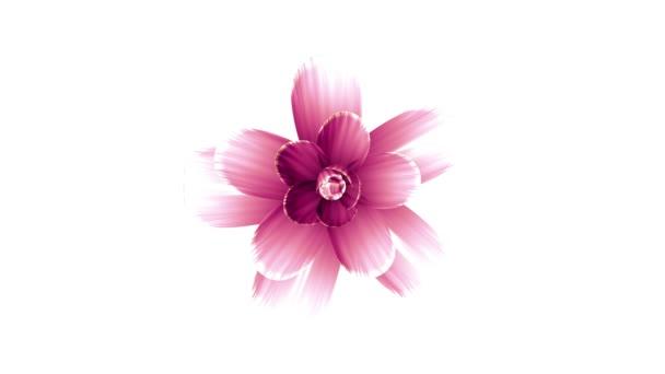 nyitó hosszú virágzó rózsaszín virág gyorsított 3d animáció háttér gyönyörű új minőségi elszigetelt üdülés természetes virágos hűvös szép 4 k videofelvétel