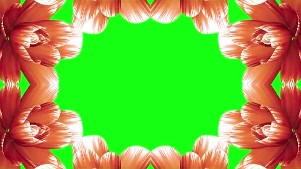 opening long blooming orange flowers farme time-lapse animation isolated on chroma key green screen background new quality wedding 3d beautiful holiday natural floral cool nice 4k video footage