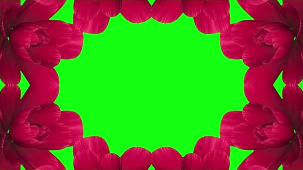 opening long blooming red flowers farme time-lapse animation isolated on chroma key green screen background new quality wedding 3d beautiful holiday natural floral cool nice 4k video footage