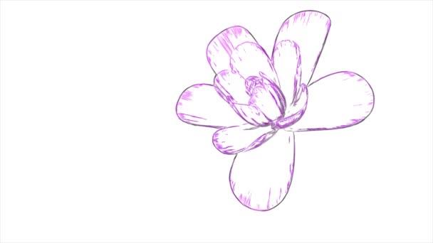 rajzfilm húzott nyitó hosszú virágzó virág gyorsított animációs háttér gyönyörű új minőségi elszigetelt üdülés természetes virágos hűvös szép 4 k videofelvétel