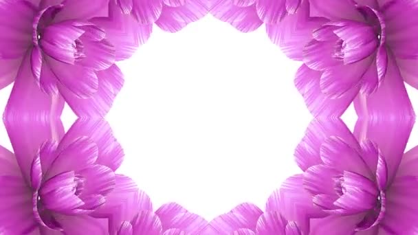 opening long blooming pink flowers farme time-lapse animation isolated on white background new quality wedding 3d beautiful holiday natural floral cool nice 4k video footage