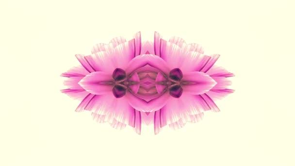 okrasné kvetoucí květina kaleidoskop pohybu animace pozadí - nové kvalitní dovolená tvar barevné univerzální pohybu dynamický animovaný radostné Super pěkné hudební video záběry