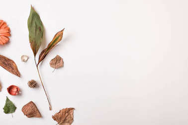 Autumn set of dry leaves with copy space