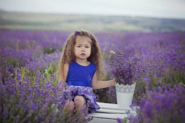 Iconic blond chestnut cute fancy dressed girl posing sit in center of lavender meadow field in velvet violet airy dress with basket bucket full of flowers happyly on vacation hollydays