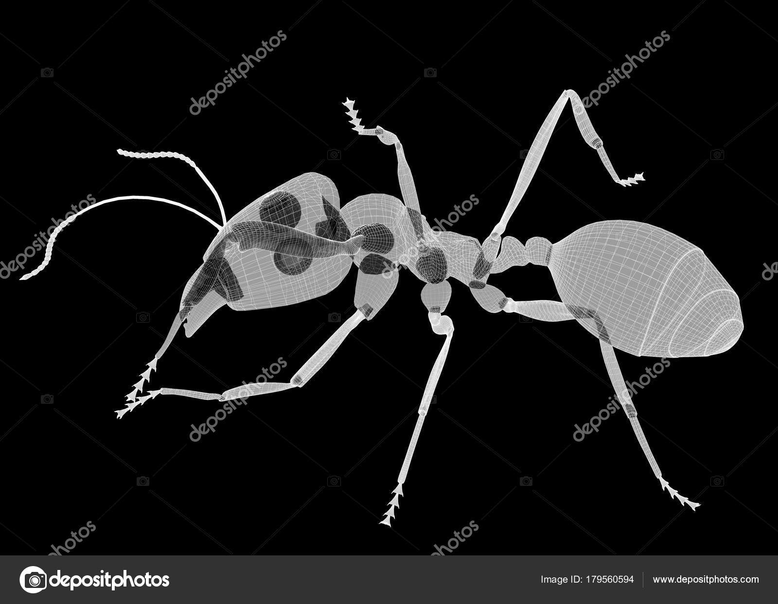ant in wire carcass — Stock Photo © Podsolnukh #179560594