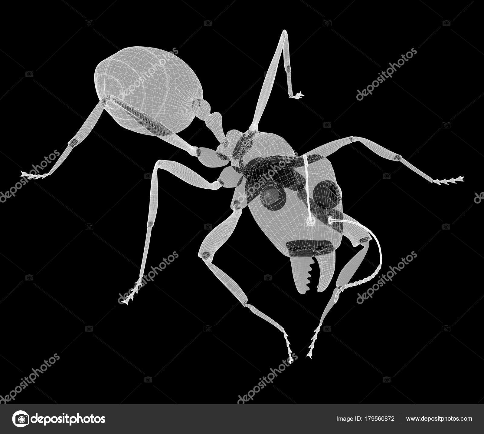 ant in wire carcass — Stock Photo © Podsolnukh #179560872