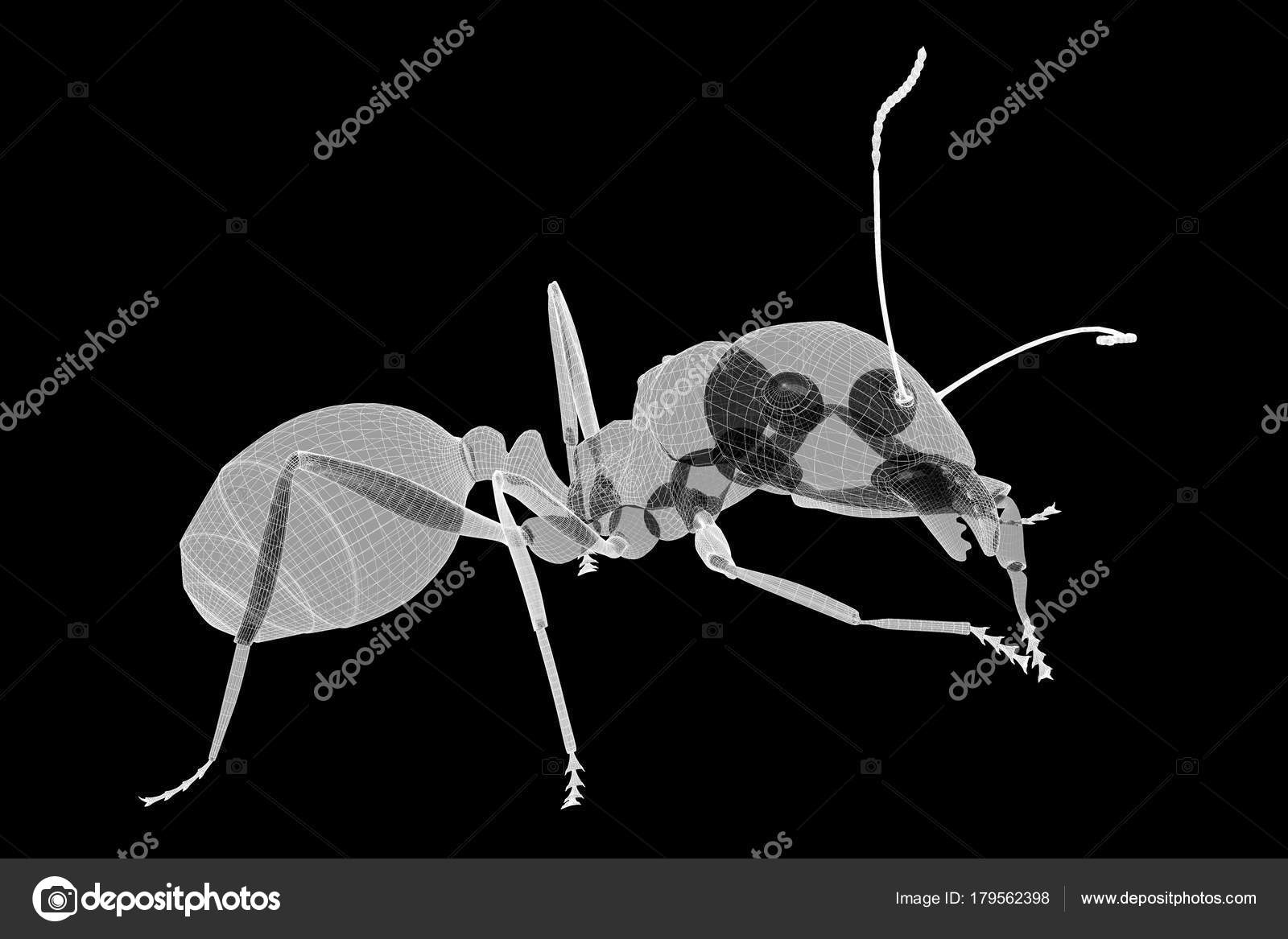 ant in wire carcass — Stock Photo © Podsolnukh #179562398