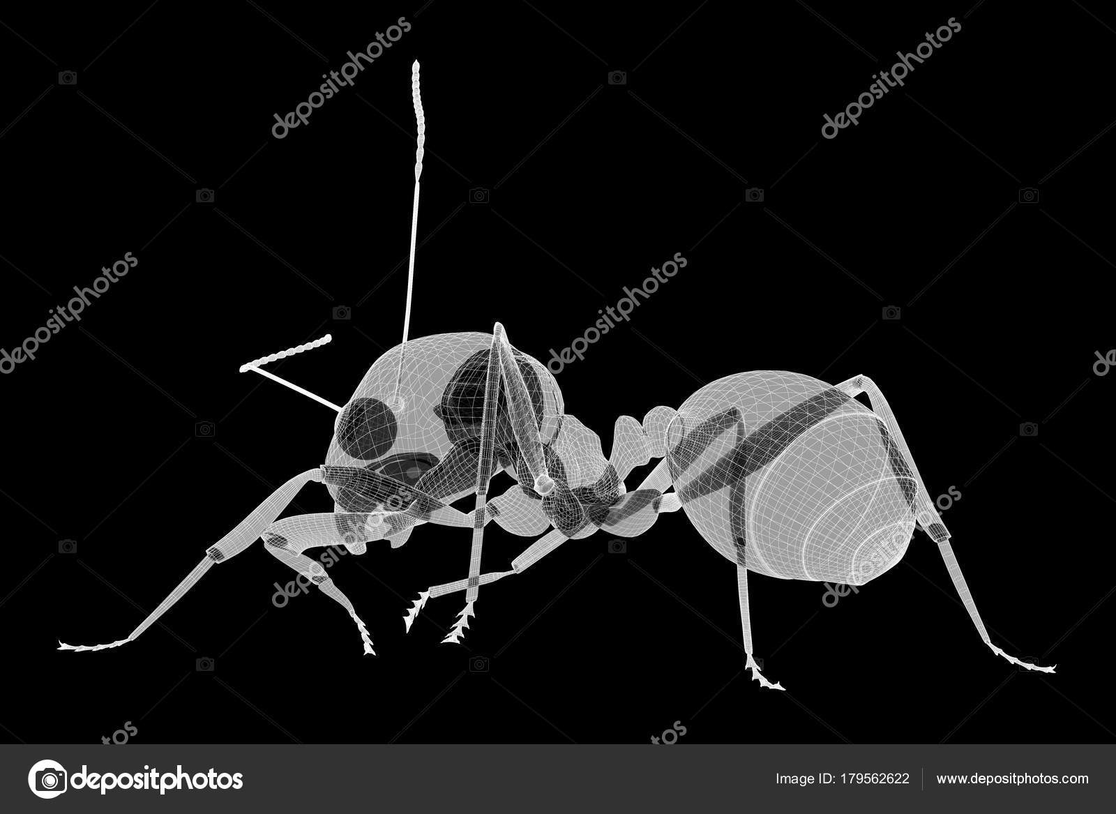 ant in wire carcass — Stock Photo © Podsolnukh #179562622